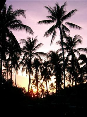 Abendsonne über Koh Tao
