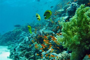 Tubbataha Riff - Philippinen