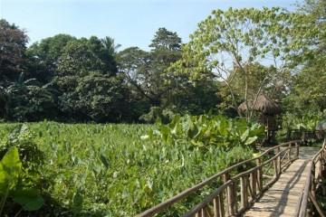Quezon National Forest Park