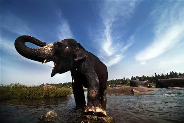 Indischer Elefant - Indonesien
