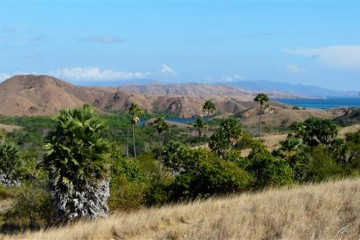 Komodo - Indonesien