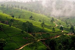Gebirge mit Teeplantagen - Sri Lanka