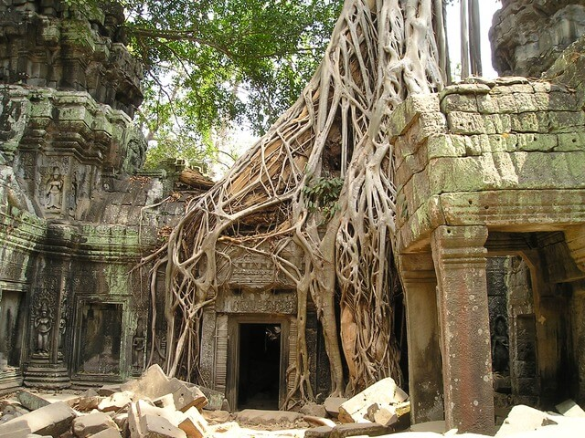 Die Natur nimmt Angkor Wat ein