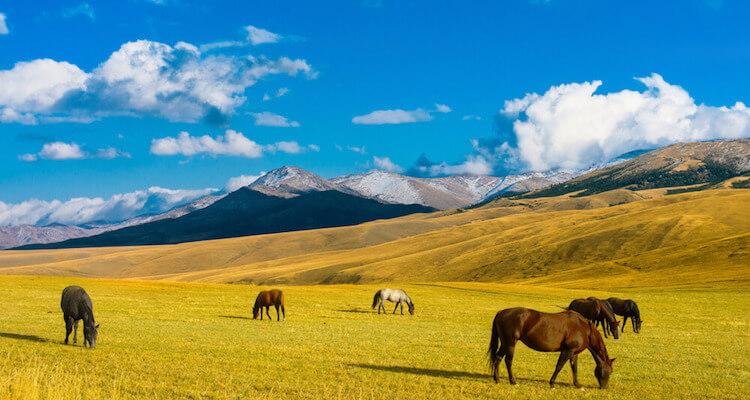 Steppe Zentralasien