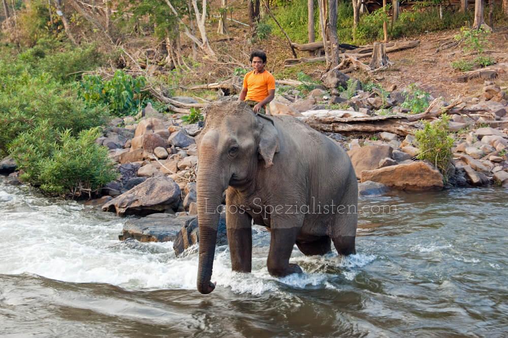 Mahout badet Elefant