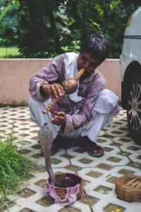 königskobra indien