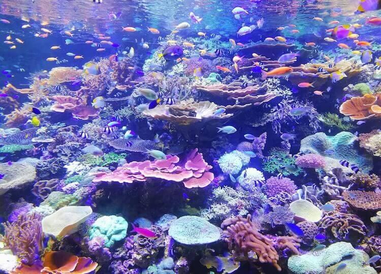 Korallenriff tauchen
