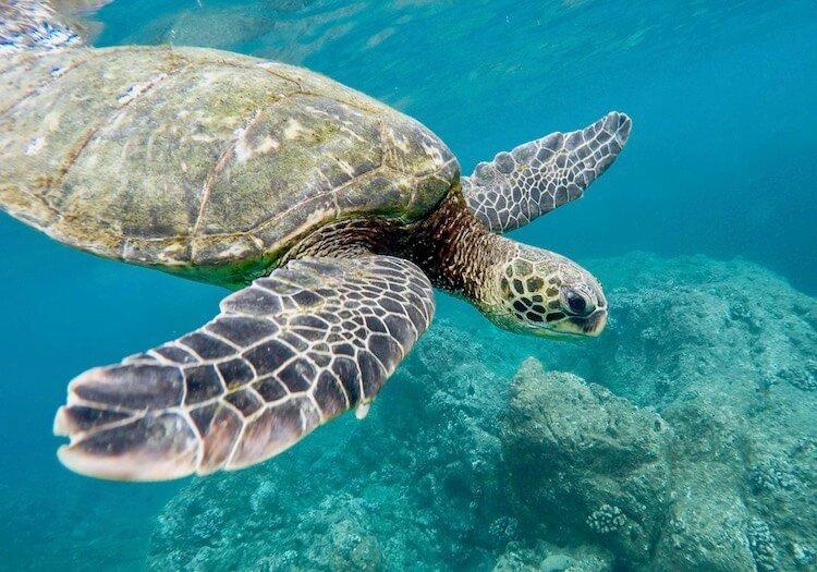 schnorcheln schildkröten gili air