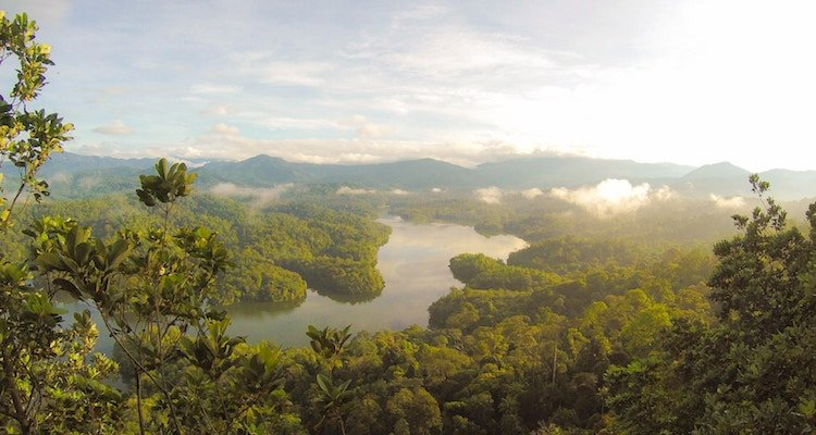 forest tropical malaysia